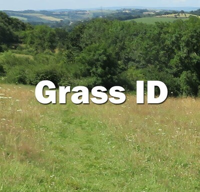 Grass ID (Hampshire): Wednesday 8th July 2020