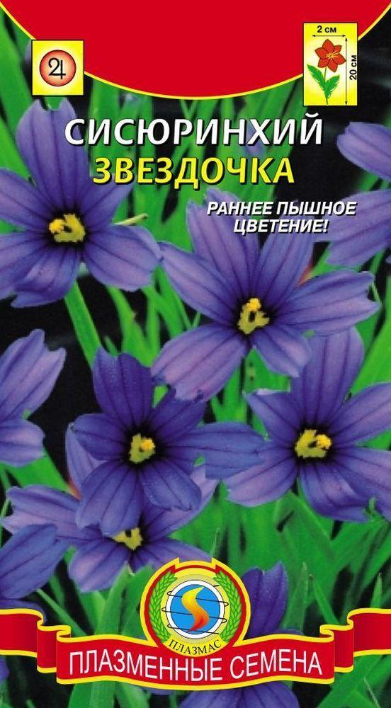 Сисирюнхий Звездочка 01784