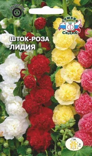 Шток-роза Лидия 02001