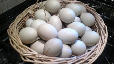 Hatching Eggs x 6