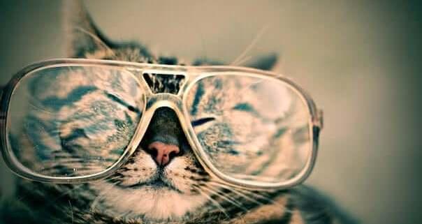 """alt=""""Katze mit Brille und zugekniffenen Augen, love change leave"""""""