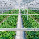IoT 農業に関する記事