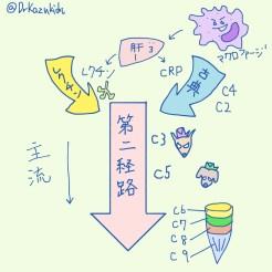 補体の経路たち