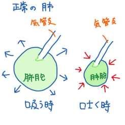 正常の肺胞