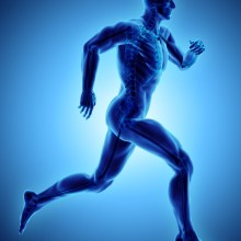male running pose with xray skeleton joint