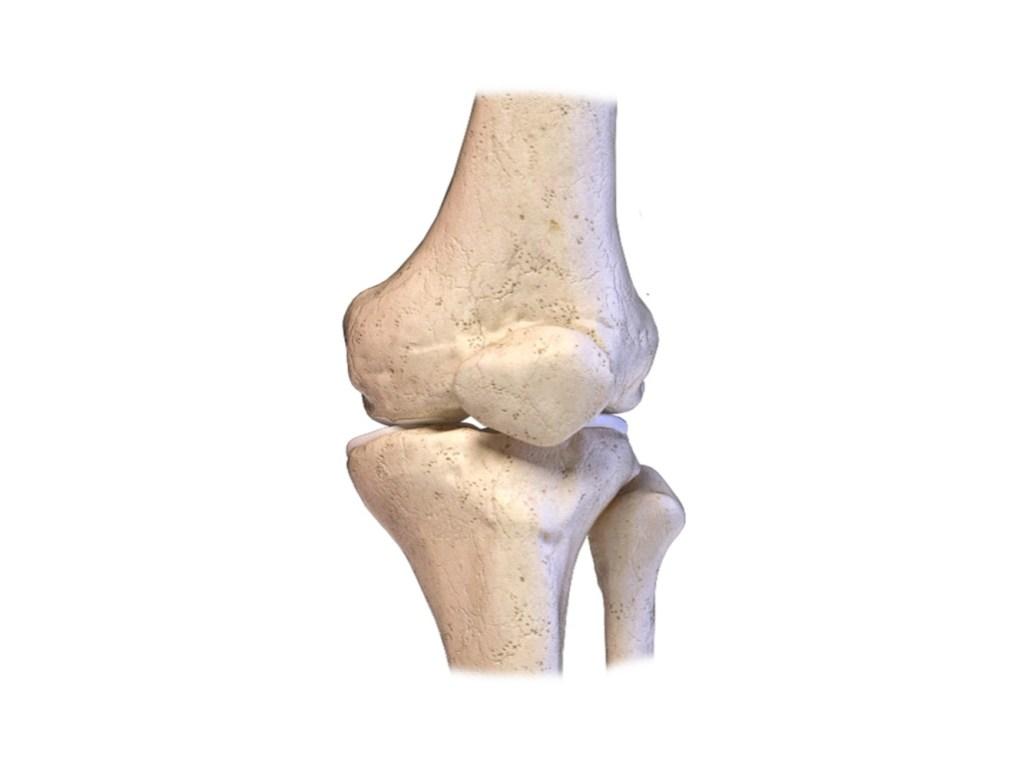 עצמות מפרק הברך