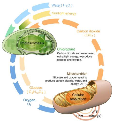 Label Diagram Ecosystem