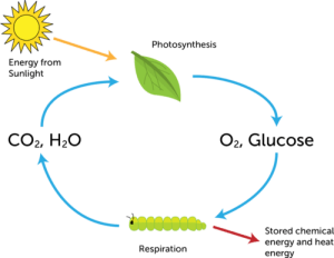 Chemistry of Living Things | CK12 Foundation
