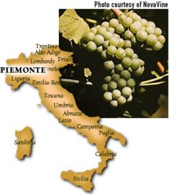 Arneis grape from Piedmonte