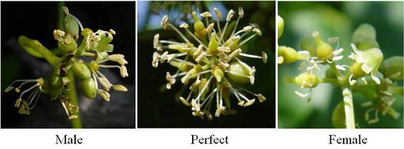courtesy of www.caes.uga.edu