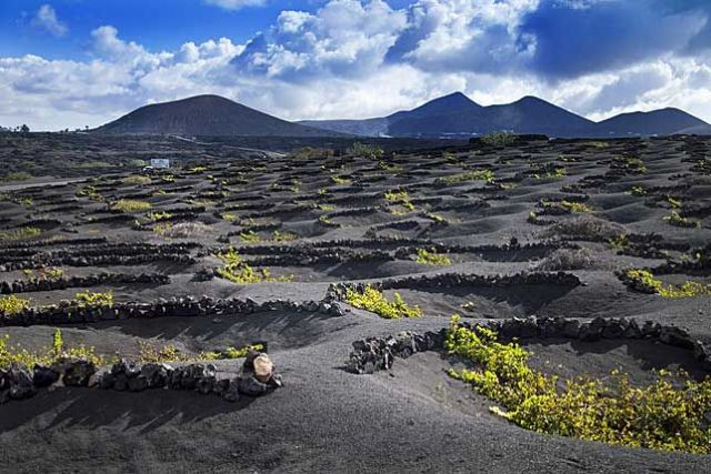 Volcanic soil Dracaena Wines
