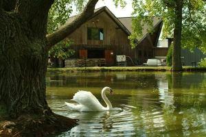 swan in front of Wagner Vineyards
