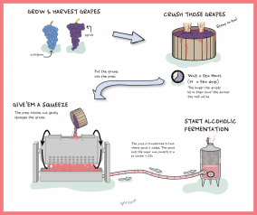 courtesy uproot wines