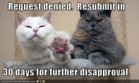 funny-pictures-cats-deny-request