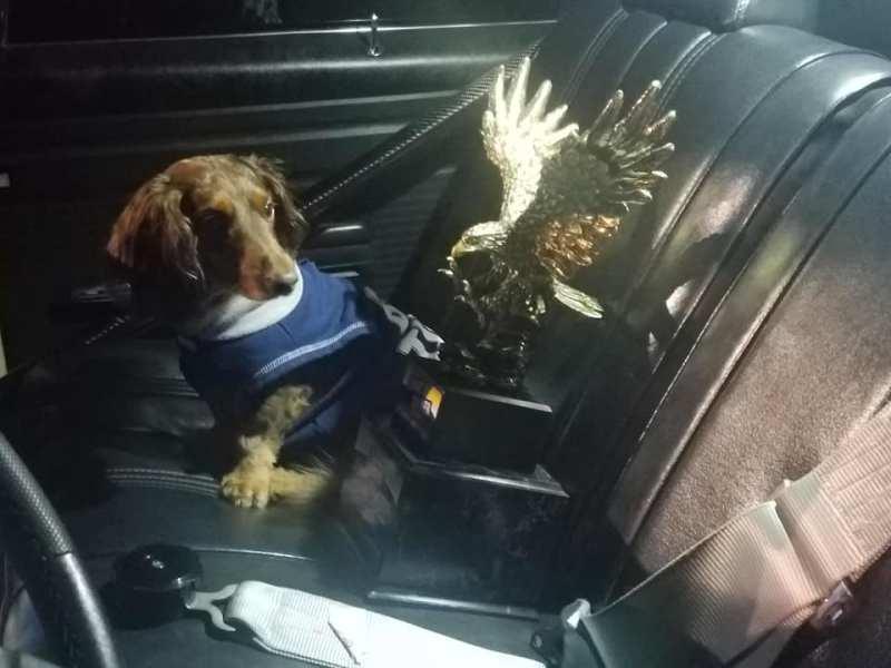 dog and trophy loose rocker super pro $75k challenge