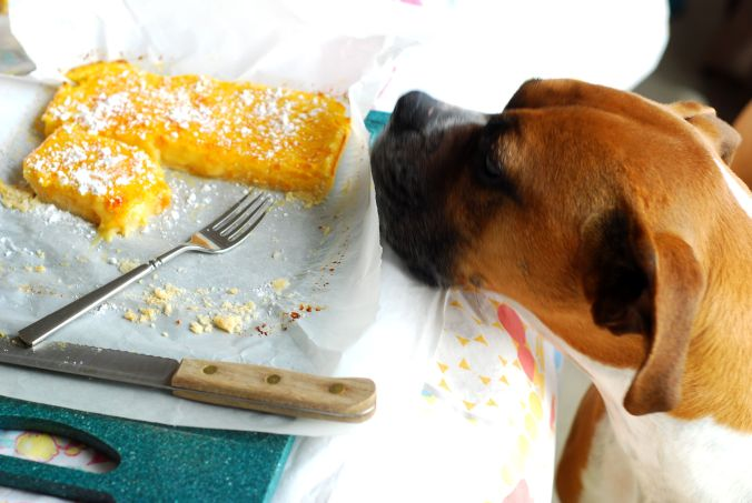 citrus bars and dog
