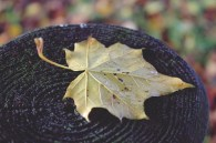 leaf-1014172_1920