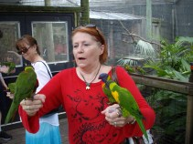 Attack of the Lorikeets!