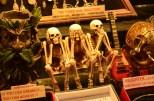 Three Skeletons