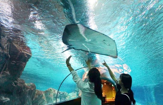 Coex aquarium. Bermain dg ikan pari