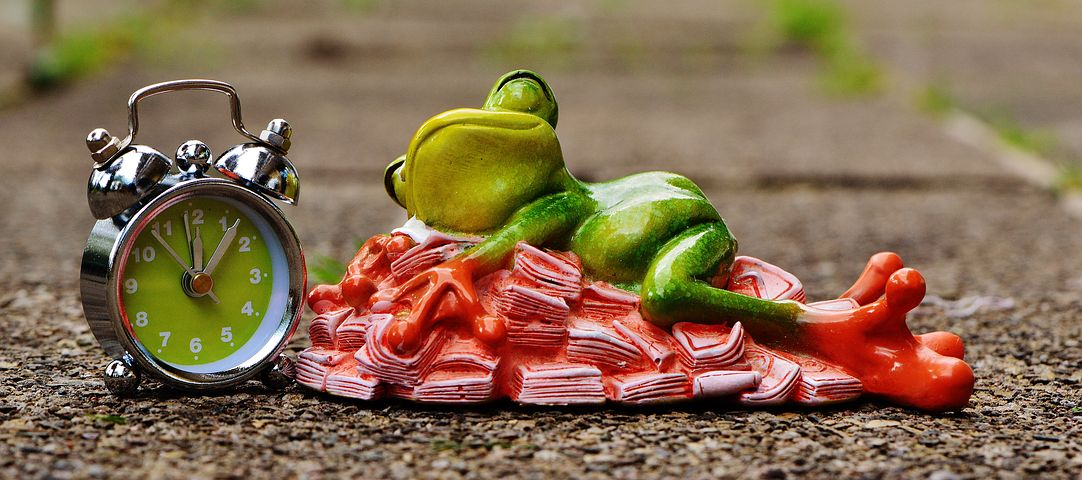 Froggy sleeps