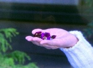 4話は紫でした