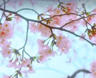 「ネットフリックス,ドラマ(フォロワーズ)第7話Favarite(お気に入り)」のアイキャッチ画像
