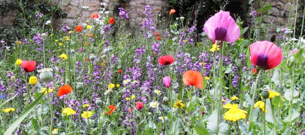 Rewilding - The wild garden in the former churchyard of Saint Mary-at-Lambeth (Photograph: Patrick Comerford, 2011)