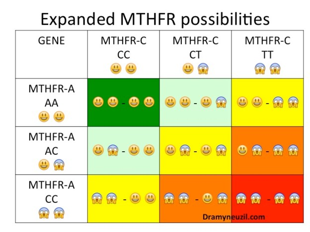 All possible variations of MTHFR gene combinations.