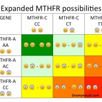Understanding the MTHFR Mutation Basics