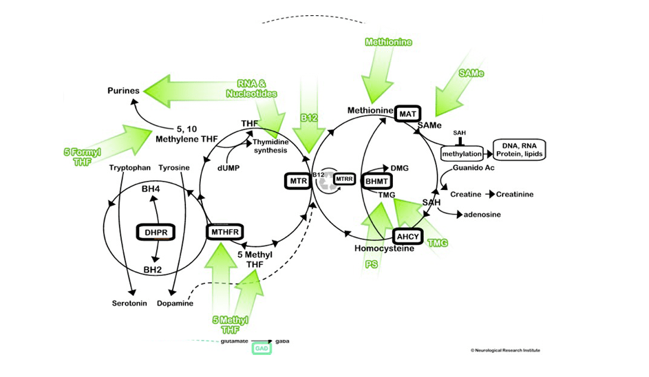 Awesome (and kind of intense) view of that methylation cycle that helps to show the best B12 for MTHFR mutants from Dramyyasko.com