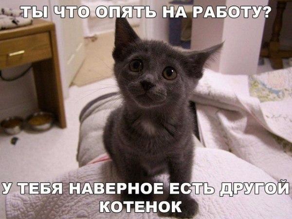 Смешные картинки про котов и котиков смотреть подборку