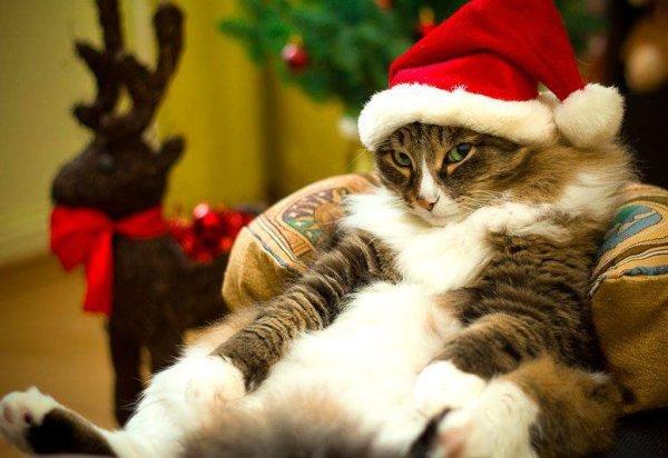 Смешные картинки про котов и котиков - смотреть подборку ...