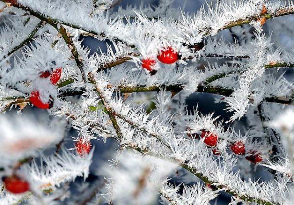 Красивые зимние картинки природы и растений лучшие