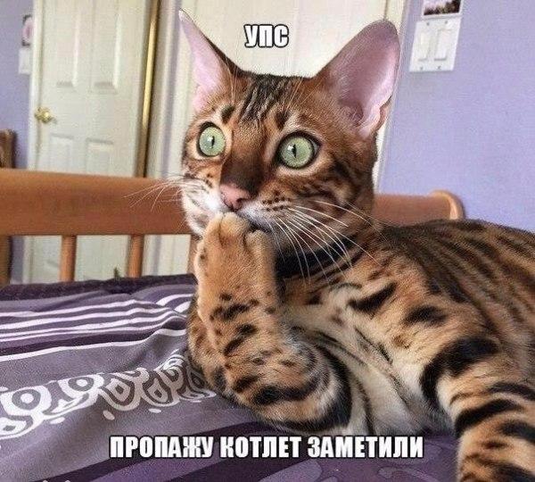 Смешные картинки про котов с надписями - веселая нарезка
