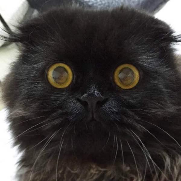 Кот Гимо с милыми глазами - необычные и красивые фото