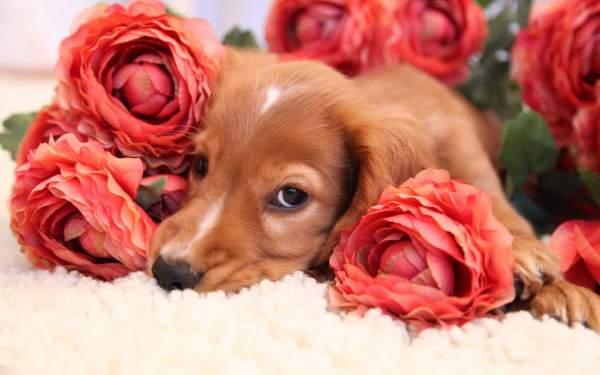 Красивые картинки с животными и цветами - самые интересные