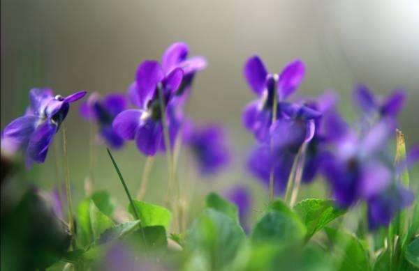 Заставки Весна для рабочего стола - скачать бесплатно в ...
