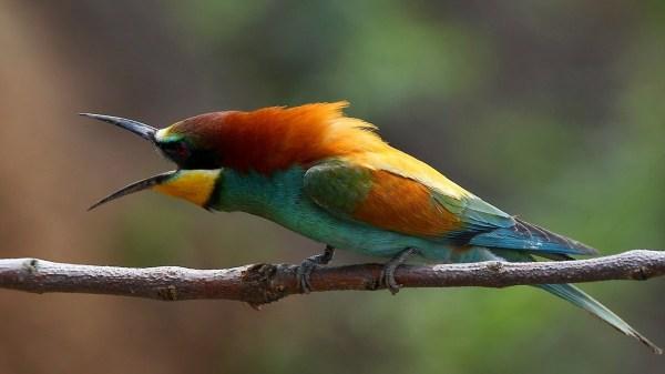 Птицы ростовской области - фото с названиями и описанием