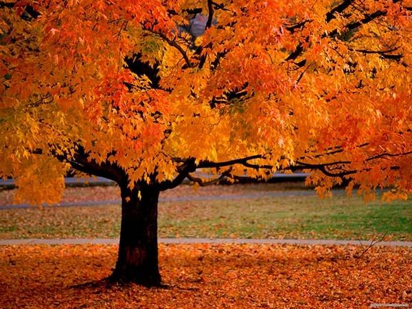 Картинки осень на телефон 240 на 320 - подборка