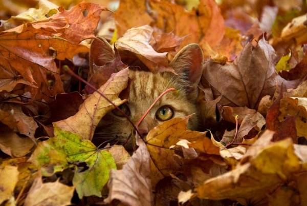 Картинки осень с животными на рабочий стол