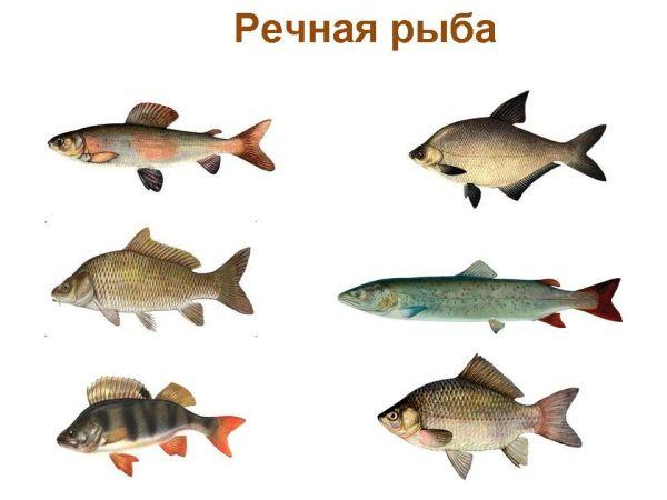 Картинки рыба на прозрачном фоне для детей - сборка