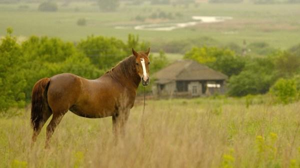 Конь в поле картинки и обои красивые