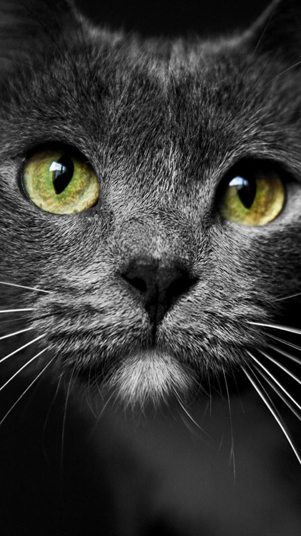 Красивые картинки кошки на телефон