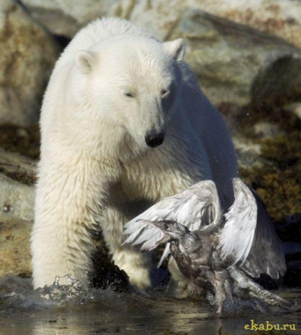 Медведь и птичка картинки - подборка