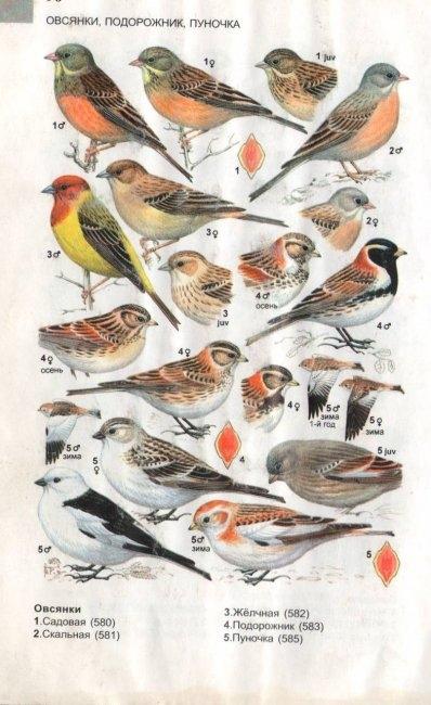 Названия птиц и их картинки для детей