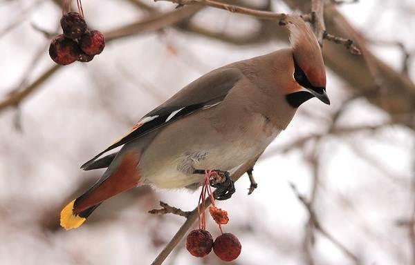 Птицы зимующие в Подмосковье фото и название