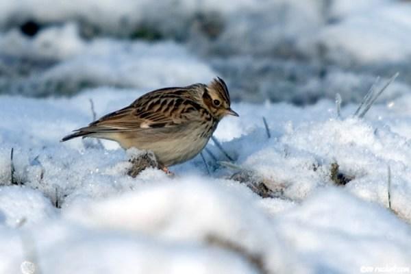Птицы северо запада России - фото с названиями