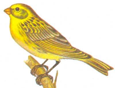 Птицы средней полосы России - фото и названия