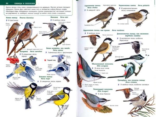 Птицы средней полосы России фото с названиями